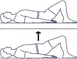 عضلات شکم